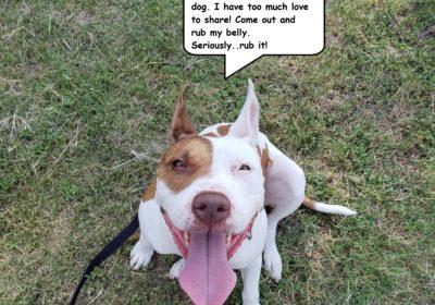 dogtrainerroundrock #bestdogtrainingpflugerville #pitbulldogtraining #dogsofbarkbusters #shelterdogs