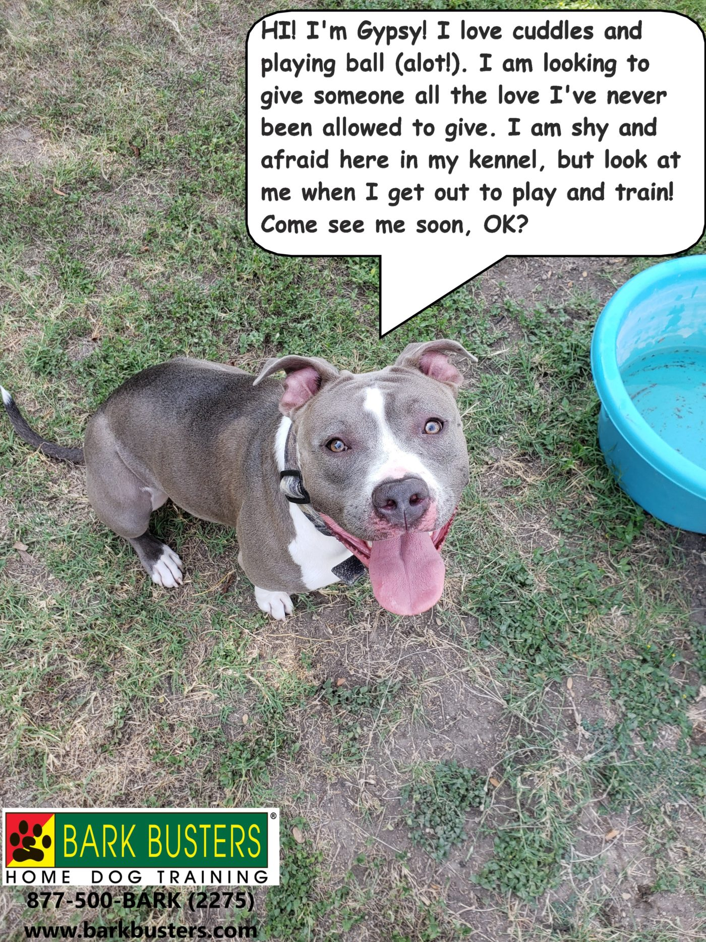 #pitbulldogtraining #bestdogtrainingpflugerville #bestdogtrainingroundrock #shelterdogs #dogsofbarkbusters