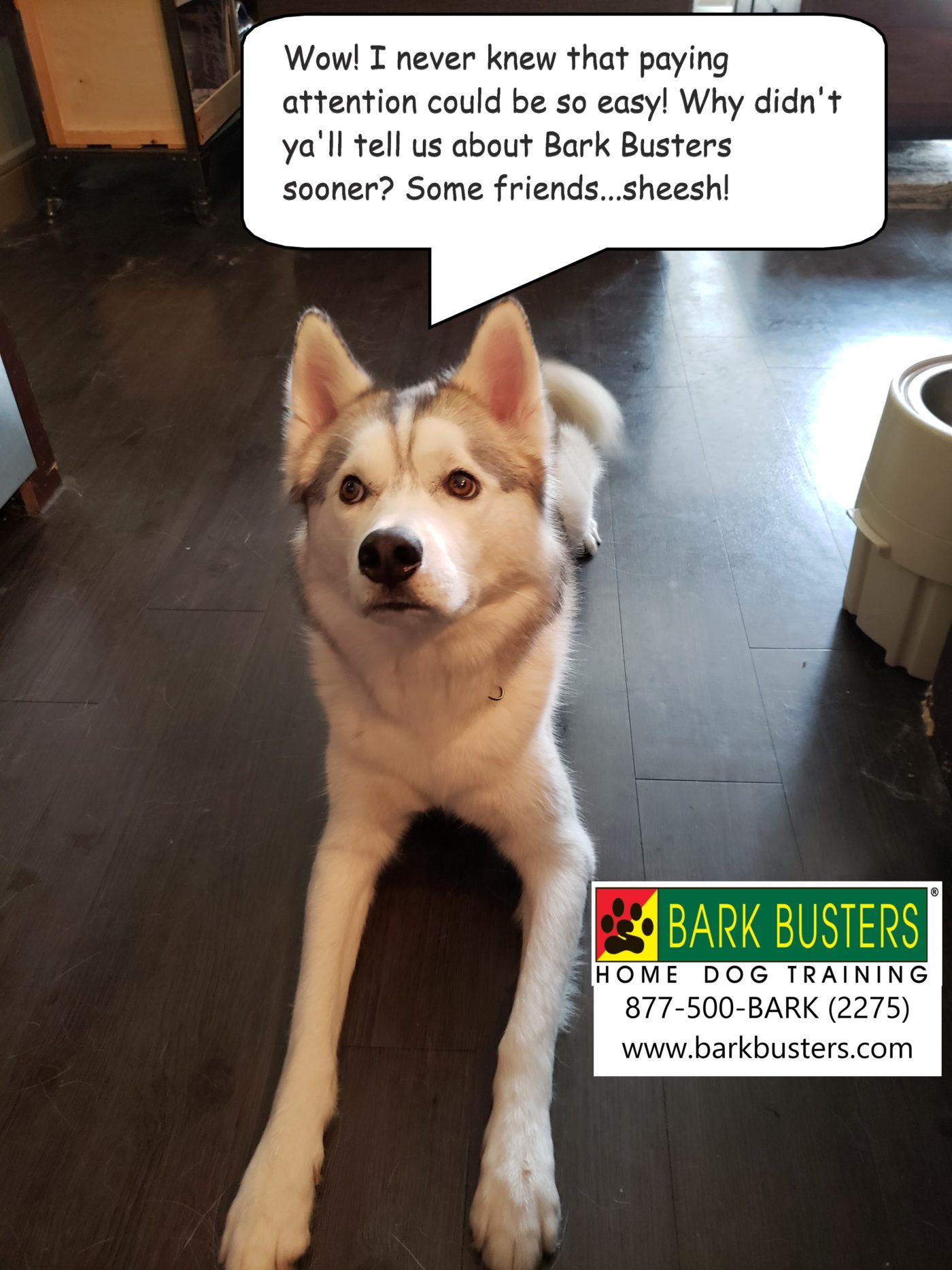 #huskydogtraining #bestdogtrainingeastaustin #dogsofbarkbusters #dogtrainerroundrock