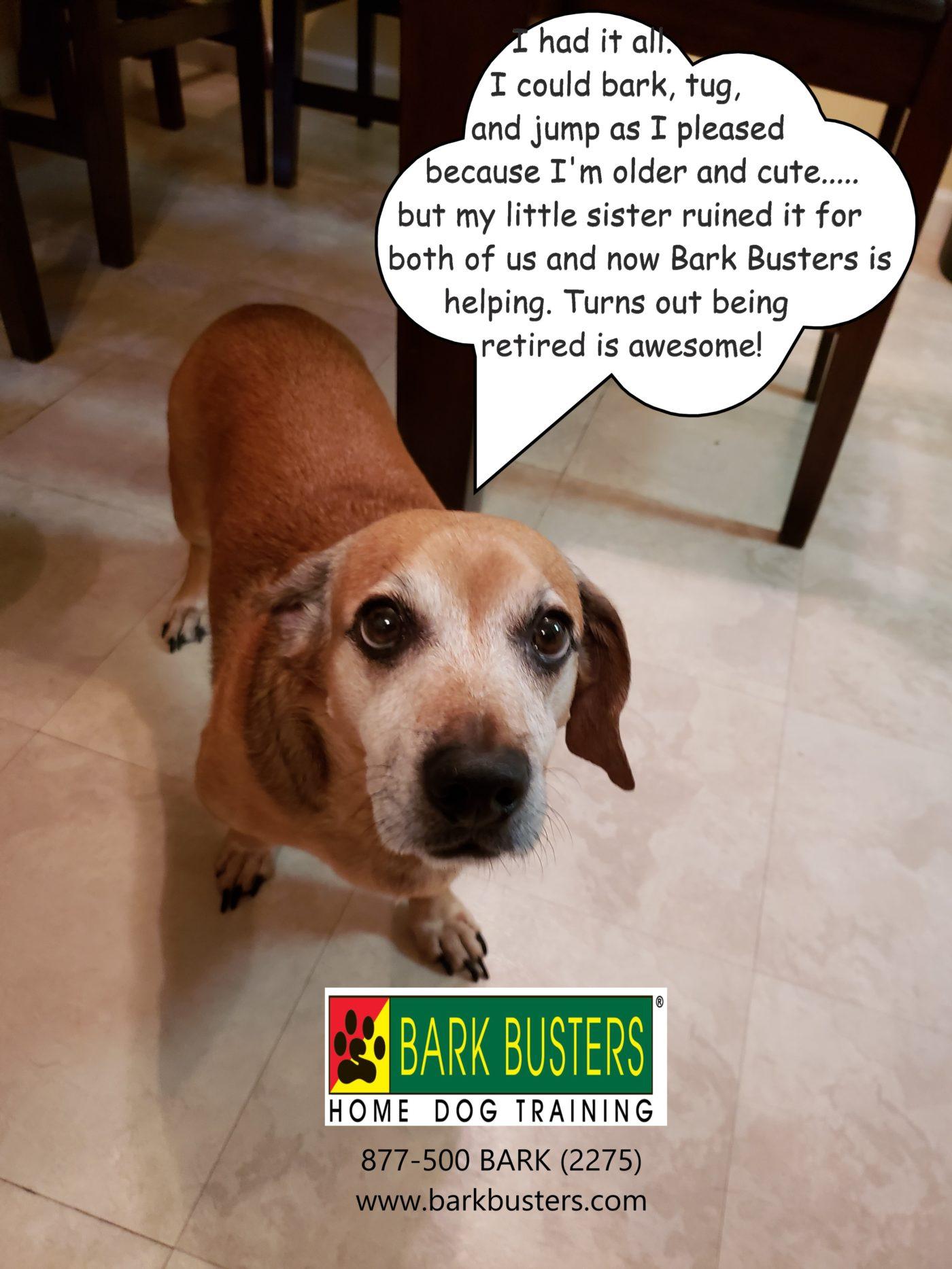 #dachshunddogtraining #dogsofbarkbusters #bestdogtrainingeastaustin #dogtrainerroundrock