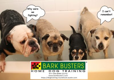 #dogsofbarkbusters #dogtrainingroundrock #dogtrainingeastaustin #siblingrivalrytraining #speaking dog