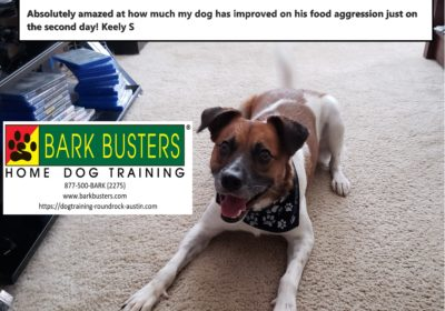 #mixeddogtraining #dogsofbarkbusters #dogtrainingroundrock #dogtrainingelgin #foodaggression