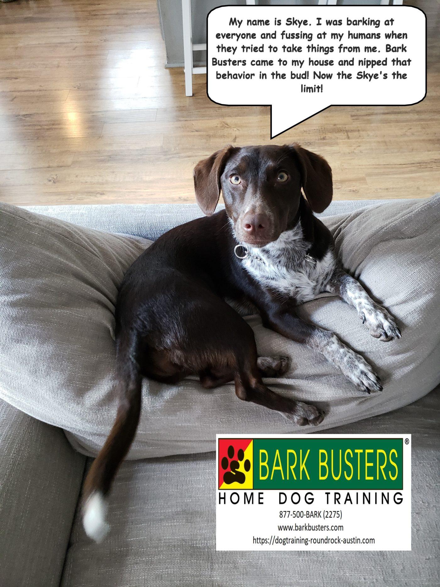 #mixeddogtraining #dogsofbarkbusters #dogtrainingeastaustin #bestdogtrainingroundrock