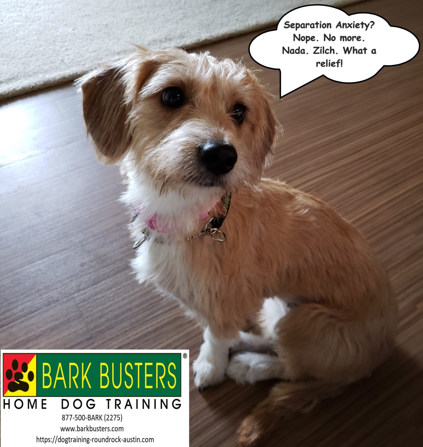#terriertraining #dogsofbarkbusters #dogtrainingroundrock #dogtrainingeastaustin #separationanxiety #speakingdog