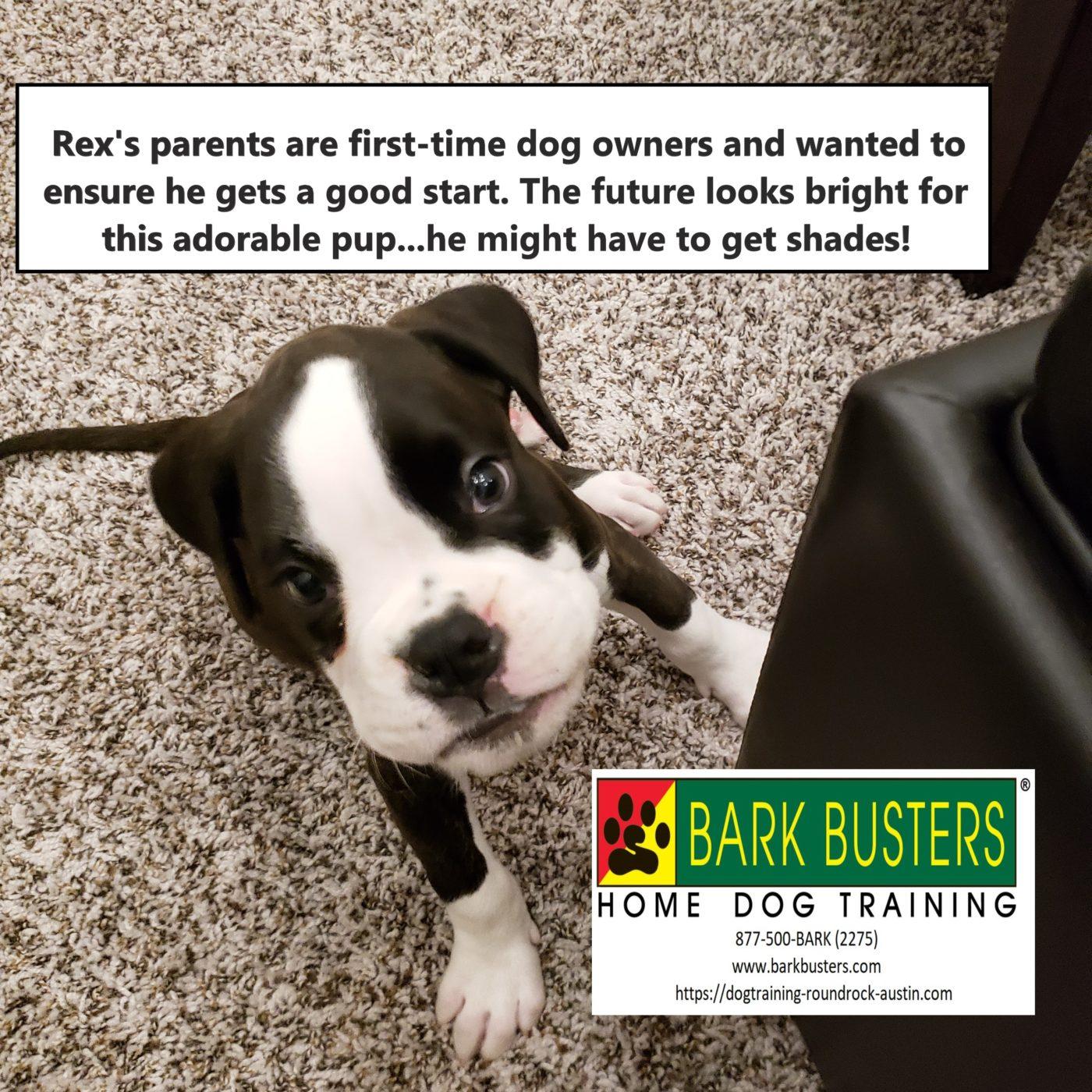 #boxertraining #dogsofbarkbusters #dogtraininggeorgetown #dogtrainingroundrock #speakingdog