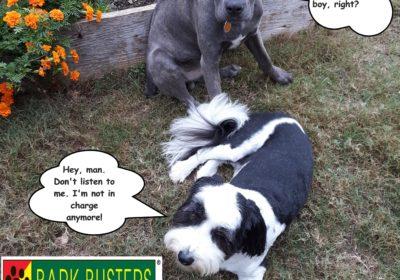 #canecorsotraining #dogsofbarkbusters #dogtraininghutto #dogtrainingroundrock #speakingdog