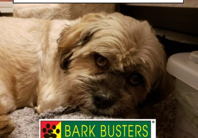 #separationanxiety #speaking dog #dogsofbarkbusters #dogtrainingeastaustin #dogtrainingroundrock