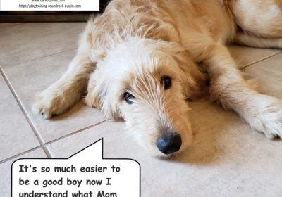 #goldendoodletraining #dogtrainingroundrock #dogsofbarkbusters