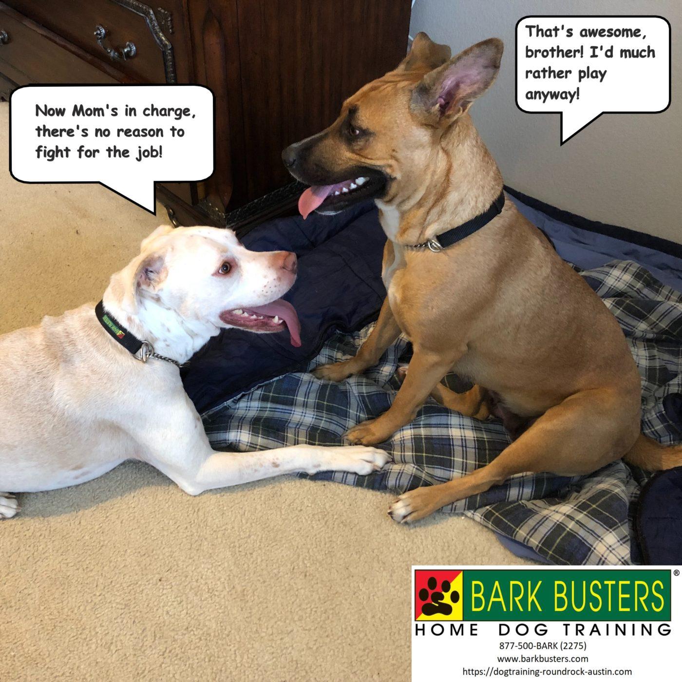 #siblingrivalry #dogsofbarkbusters #dogtrainingroundrock #speakingdog