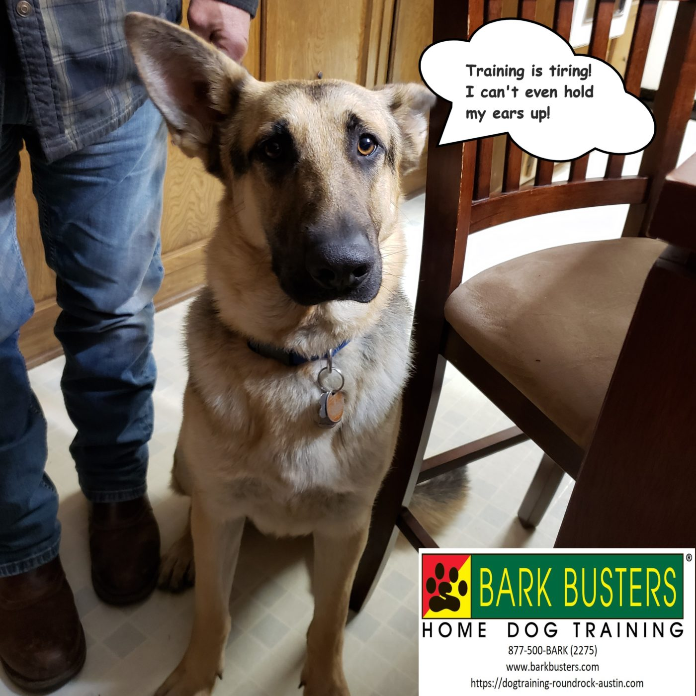 #germanshepherdtraining #dogtraininggeorgetown #dogsofbarkbusters #speakingdog #dogtrainingroundrock