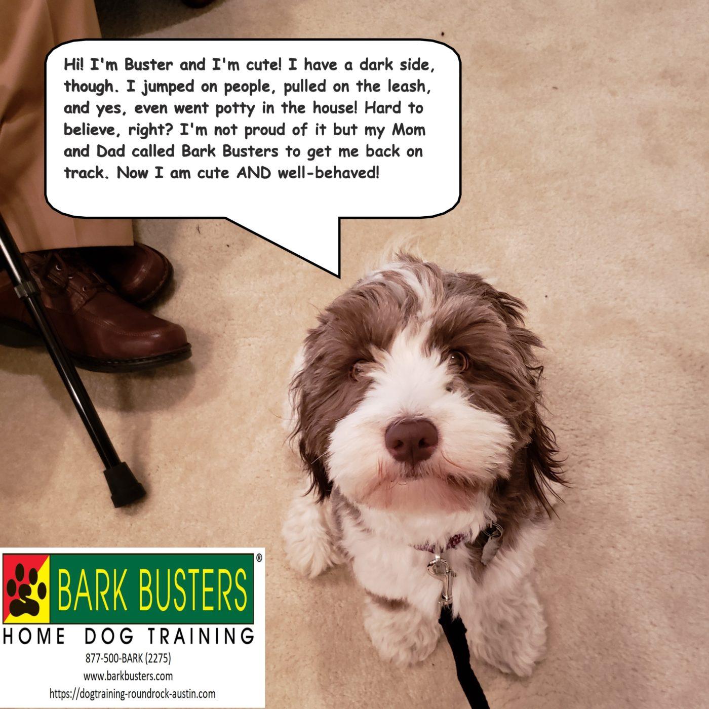 #havanesetraining #dogsofbarkbusters #dogtrainingsoutheastaustin #dogtrainingroundrock #speakingdog