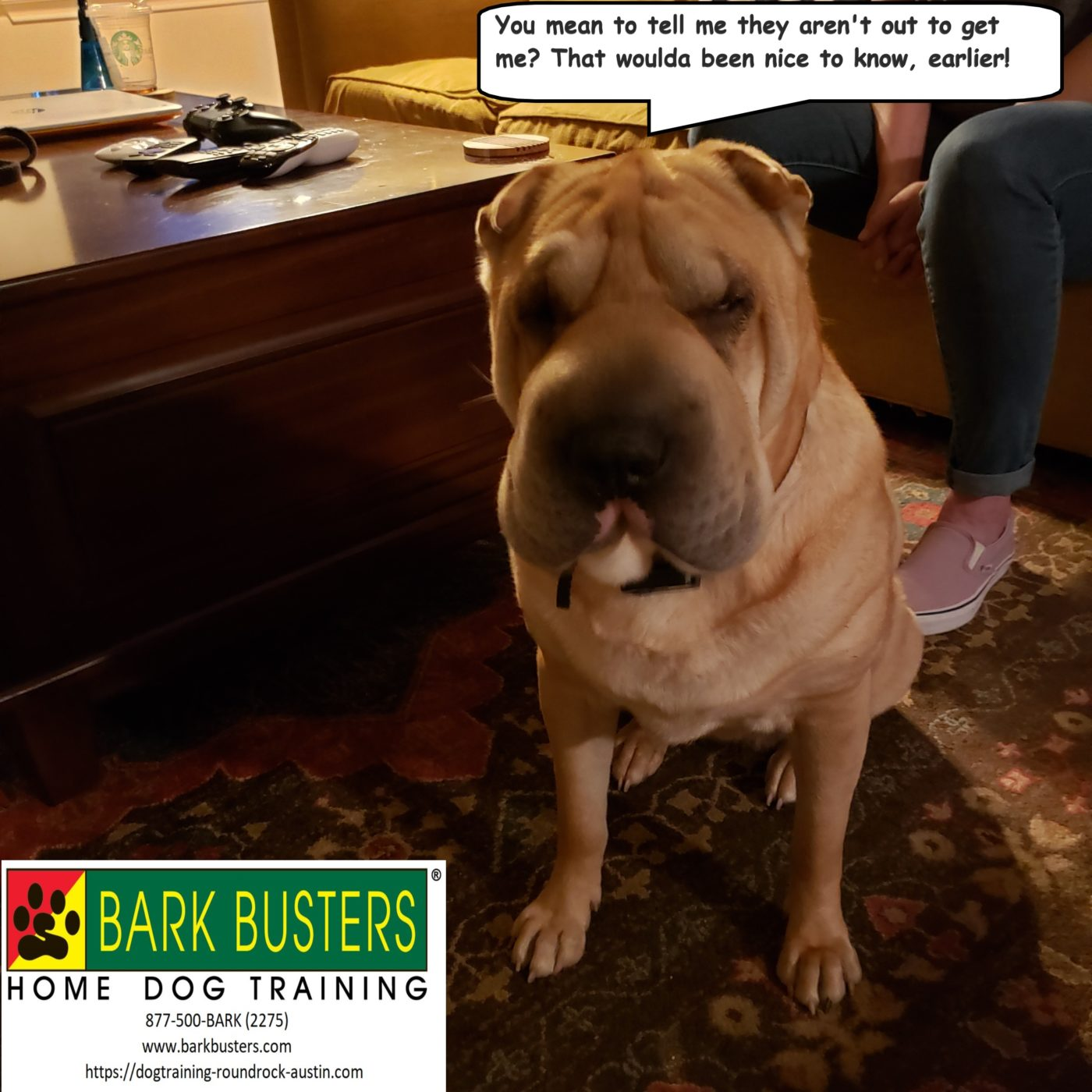 #sharpei #dogtrainingbastrop #dogsofbarkbusters #speakingdog #fearaggression