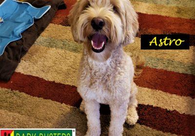 #labradoodle #aggression #dogsofbarkbusters #dogtrainingroundrock #speakingdog