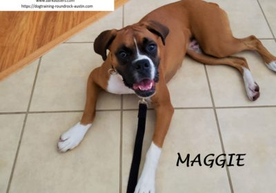 #boxer #recall #obediencetraining #speakdog #dogtrainingpflugerville #dogsofbarkbusters