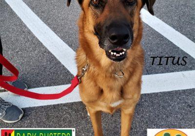 #germanshepherd #greatdane #leashmanners #dogtrainingeastaustin #inhomedogtraining #dogsofbarkbusters #speakdog #atx