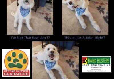 #labradoodle #dogtraininggeorgetown #obediencetraining #dogsofbarkbusters #speakdog #inhomedogtraining