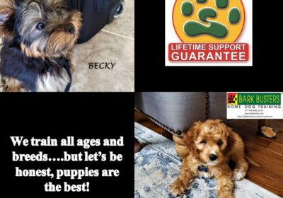 #silkyterrier #goldendoodle #dogtrainingaustin #dogtraininggeorgetown #puppy #puppytraining #dogsofbarkbusters #speakdog #inhomedogtraining