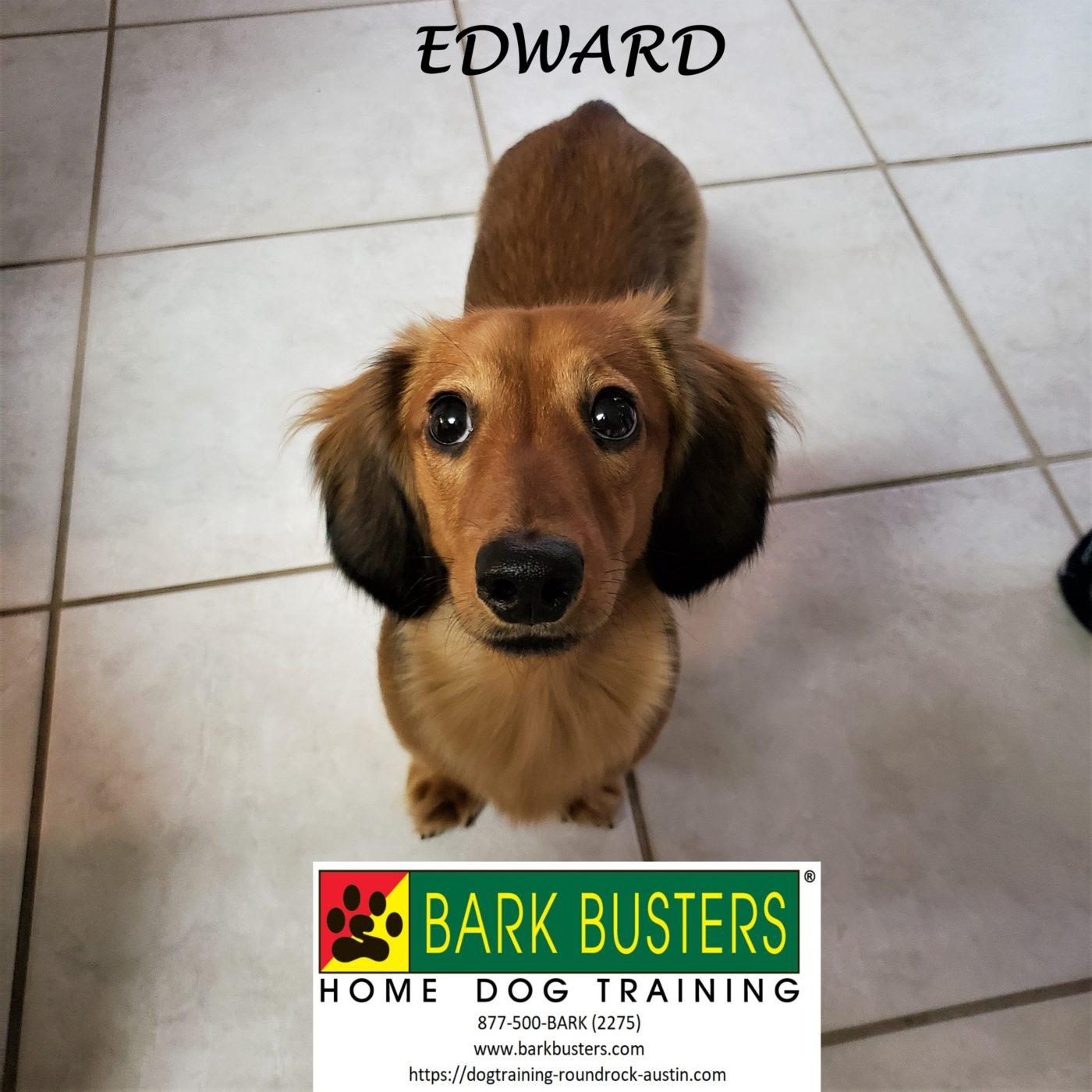 #dachshund #toilettraining #barking #destructivedog #dogsofbarkbusters #speakdog #inhomedogtraining #dogtraininggeorgetown #barkbusters