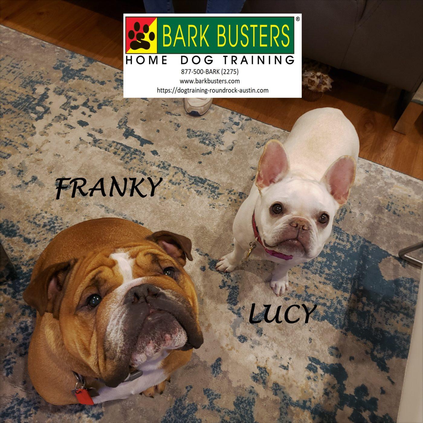 #englishbulldog #frenchbulldog #dogtrainingaustin #dogtrainingroundrock #fearaggression #doormanners #dogsofbarkbusters #barkbusters #speakdog #inhomedogtraining
