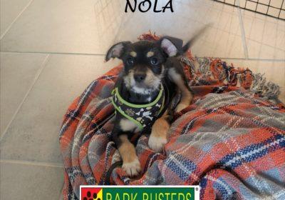 #borderterrier #dogtrainingroundrock #dogsofbarkbusters #puppytraining #speakdog #inhomedogtraining