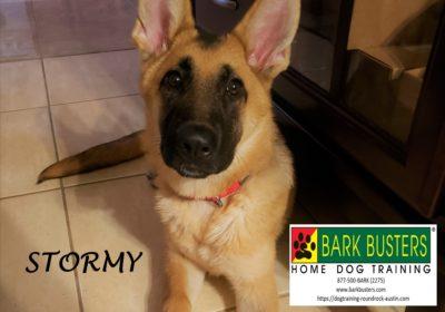 #germanshepherd #dogtraininghutto #dogtrainingroundrock #fearanxiety #obediencetraining #dogsofbarkbusters #speakdog #barkbusters #inhomedogtraining