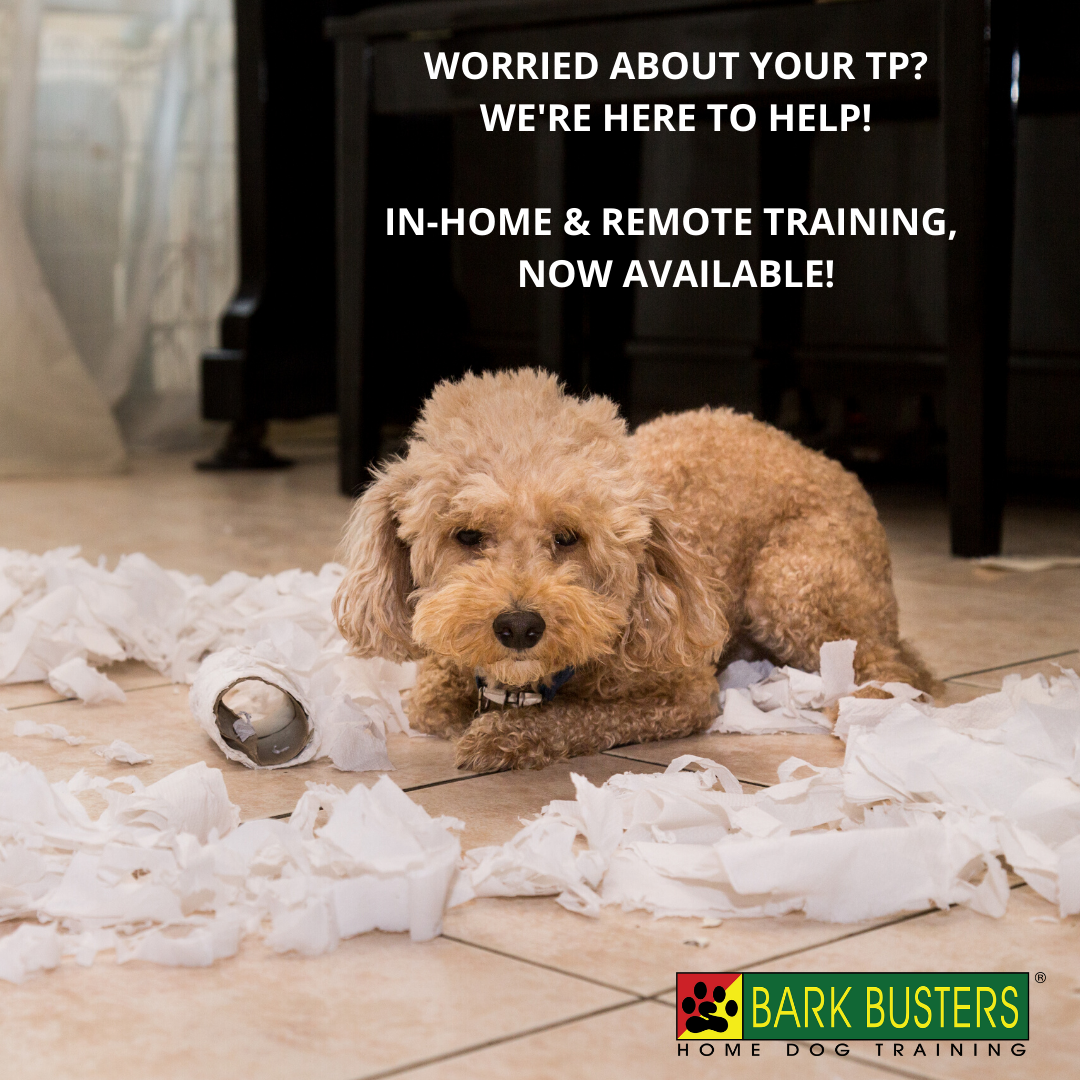 #socialdistancing #dogtrainingroundrockaustin #barkbusters #dogtrainernearme