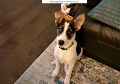 #puppytraining #catsanddogscangetalong #Impulsecontrol #dogtrainingaustin #dogtrainernearme #barkbusters #speakdog #inhomedogtraining
