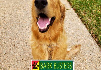 #goldenretriever #keepitsimple #leashtraining #obediencetraining #dogtrainingroundrock #dogtrainernearme #barkbusters #speakdog #inhomedogtraining