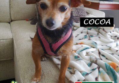 #chihuahua #jackrusselterrier #dogtrainingaustin #leashmanners #dogtrainernearme #speakdog #barkbusters #inhomedogtraining