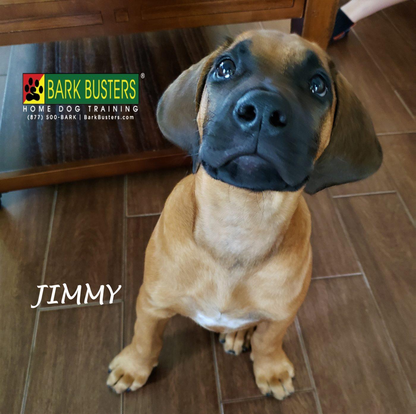 #rhodesianridgeback #puppytraining #dogtrainingroundrock #dogtrainernearme #barkbusters #speakdog #inhomedogtraining