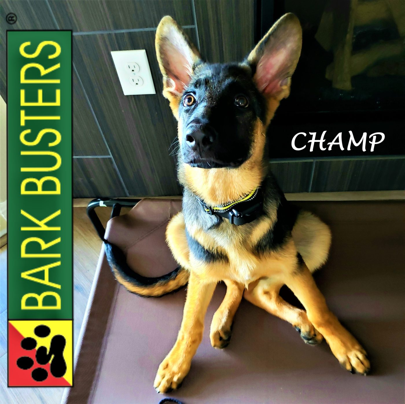 #germanshepherd #puppytraining #dogtrainingaustin #dogtrainernearme #speakdog #barkbusters #inhomedogtraining