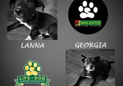 #pitbullmix #terriermix #puppytraining #siblingrivalry #dogtrainingpflugerville #dogtrainernearme #barkbusters #speakdog #inhomedogtraining