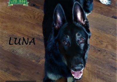 #germanshepherd #GSD #dogtrainingroundrock #leashmanners #obediencetraining #dogtrainernearme #barkbusters #speakdog #inhomedogtraining