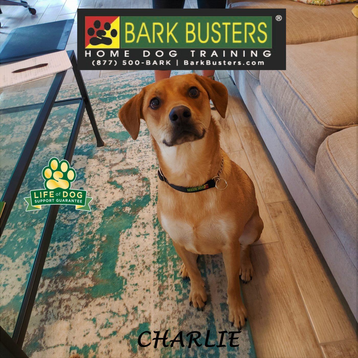 #loveabledog #dogtraininggeorgetown #beaglemix #separationanxiety #leashmanners #dogtrainernearme #barkbusters #speakdog #inhomedogtraining