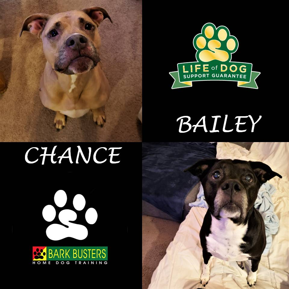 Hi Virginia! I would like to thank you for giving me the opportunity to work with you. I was very pleased with the way Billie & Snoopy (and you!) responded to the training. You have wonderful dogs and I'm confident with your moving