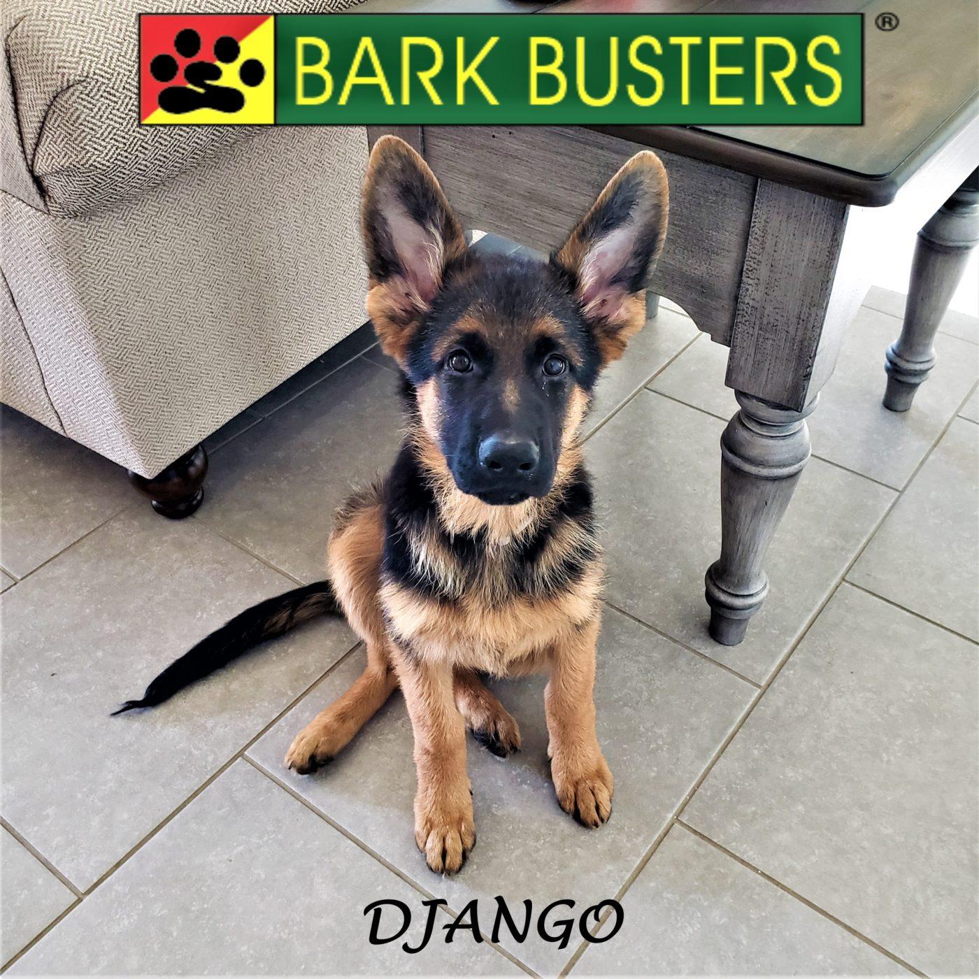 #germanshepherd #puppytraining #dogtrainingaustin #dogtrainernearme #barkbusters #abetterwaytoabetterdog #inhomedogtraining