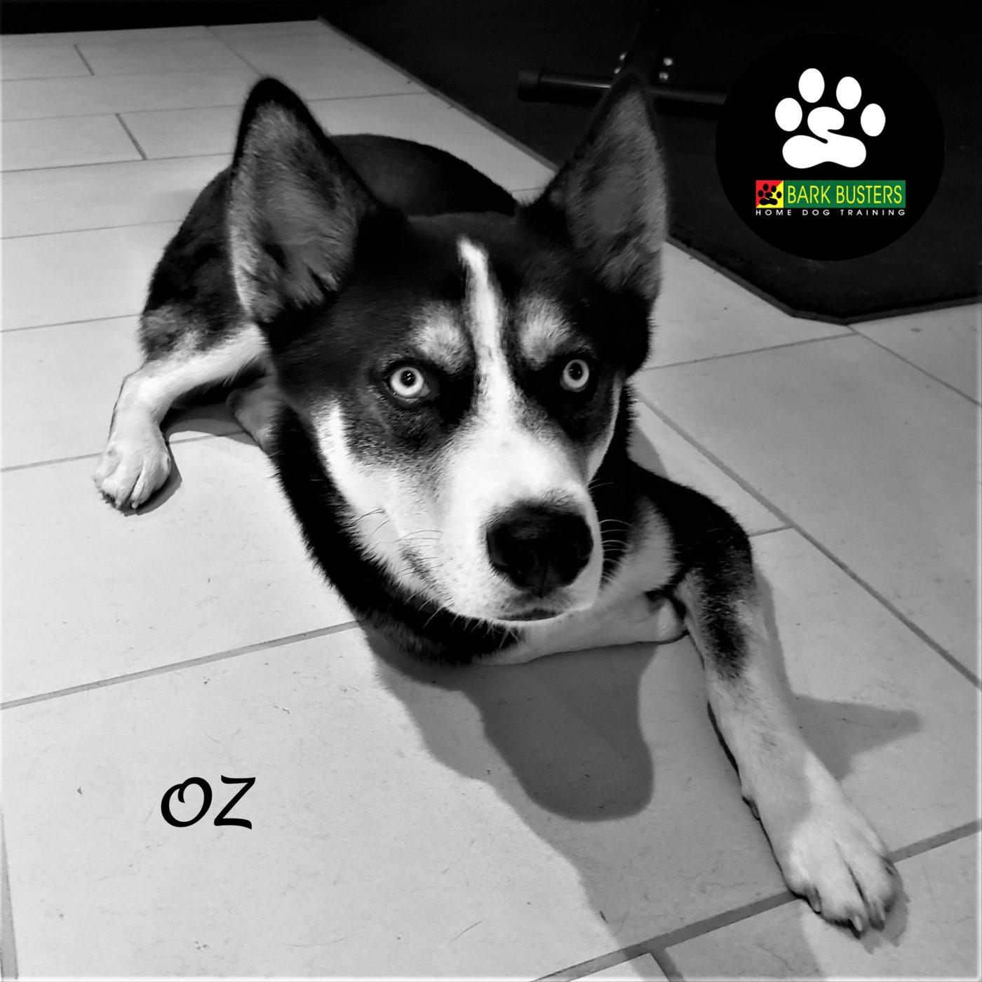 #husky #dogtrainingaustin #separationanxiety #obediencetraining #leashtraining #dogtrainernearme #abetterwaytoabetterdog #barkbusters #inhomedogtraining