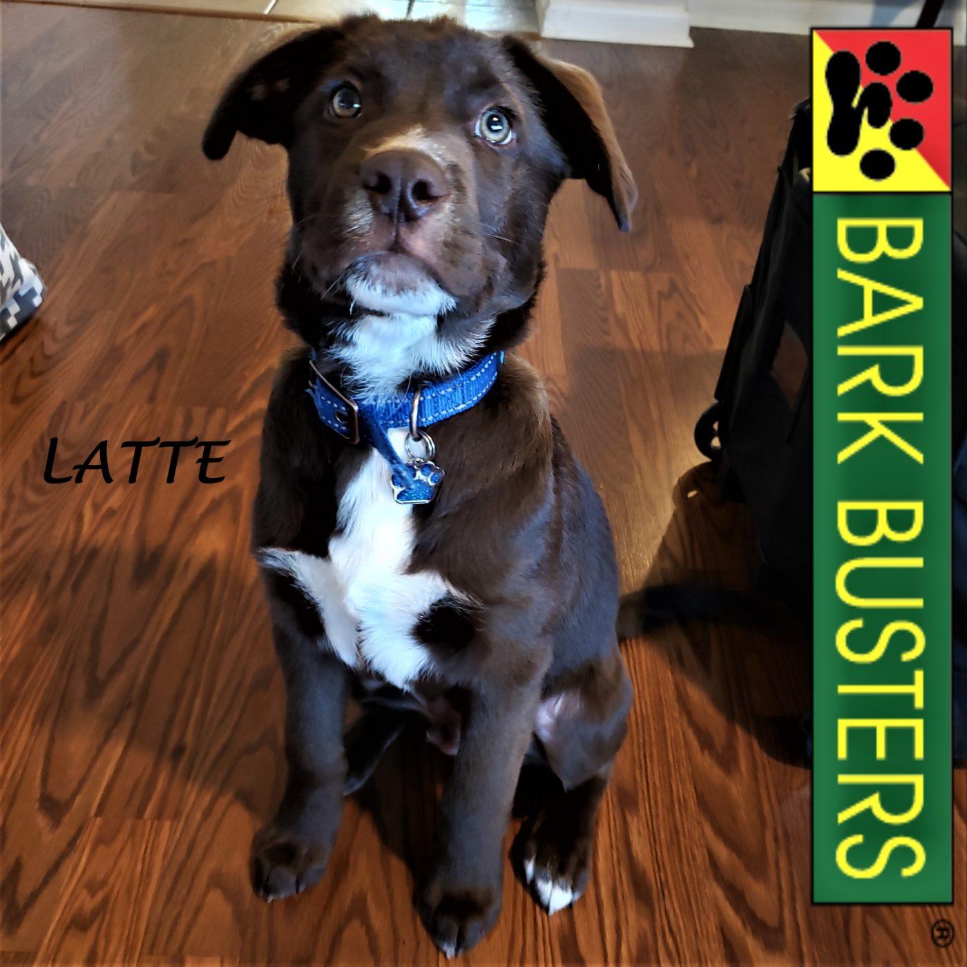 #labradorretriever #puppytraining #leashtraining #obediencetraining #dogtrainingaustin #dogtrainernearme #barkbusters #atx #inhomedogtraining