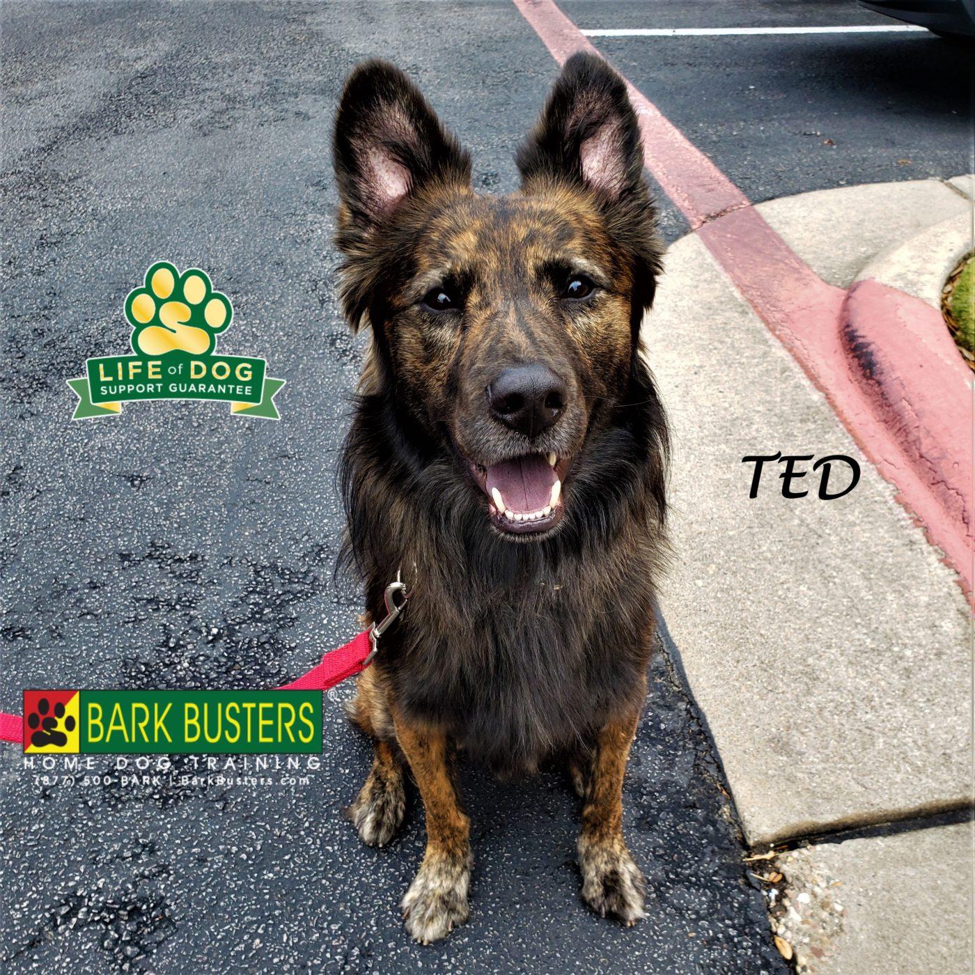#dutchshepherd #shepherdmix #resourceguarding #leashmanners #obediencetraining #dogtrainingaustin #dogtrainernearme #barkbusters #inhomedogtraining