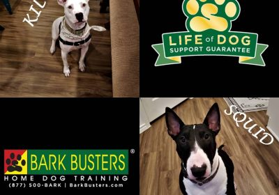 #pitbull #bullterrier #deafdog #fearaggression #countersurfing #obediencetraining #dogtrainingpflugerville #dogtrainernearme #speakdogchangeyourlife #barkbusters