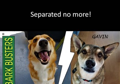 #siblingrivalry #rescuedogsarebeautiful #dogtrainingaustin #dogtrainernearme #barkbusters #speakdogchangeyourlife