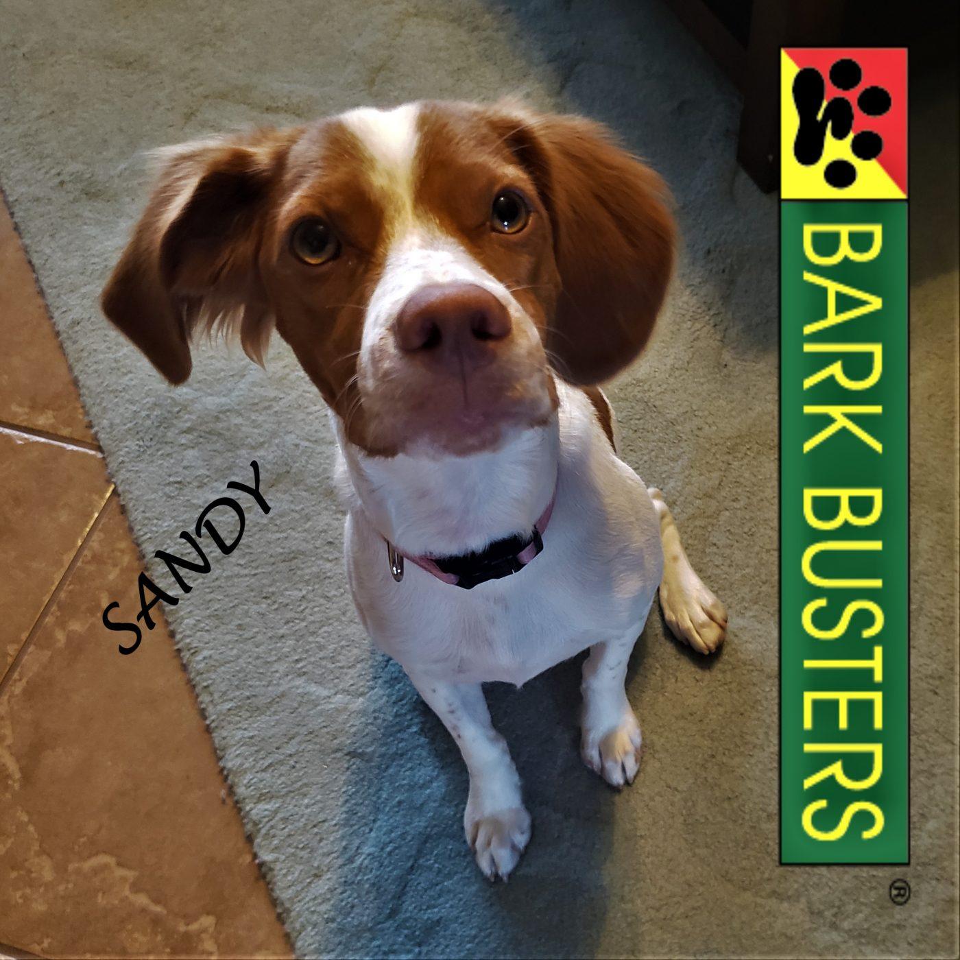 #puppytraining #dogtrainingroundrock #dogtrainernearme #barkbusters